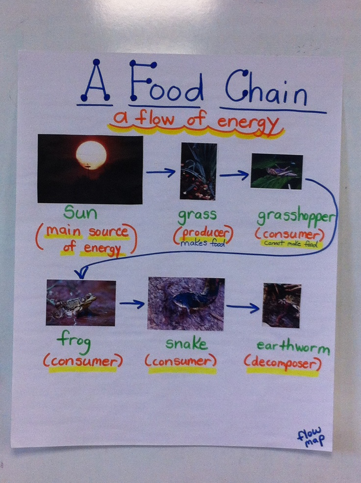 A food chain using class word walls. Science Project