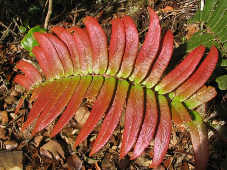 Tropical Rainforest Leaves Shiny rainforest leaf 阔叶林
