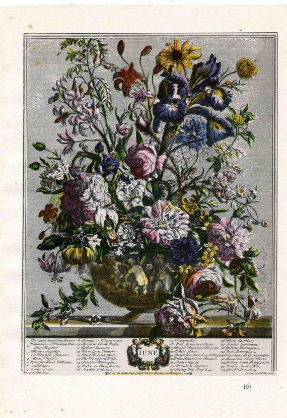 June Flower Arrangement Book Plate Botanical Engraving