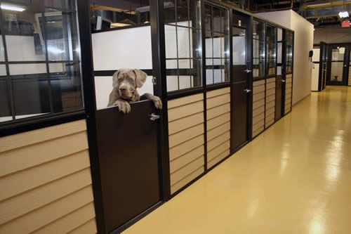 Humane Shelters And Boarding Kennel Buildings