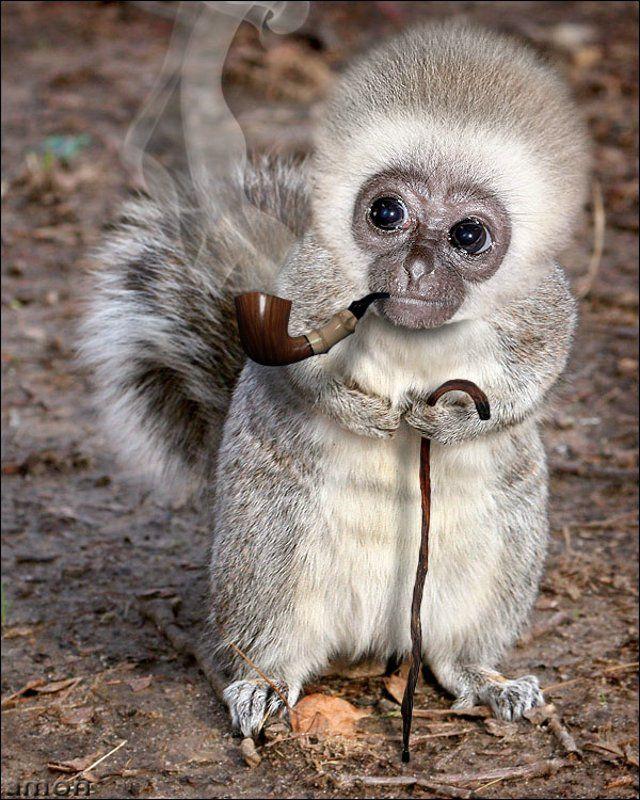 Monkeysquirrel hybrid Animals Funny, Funny Animal
