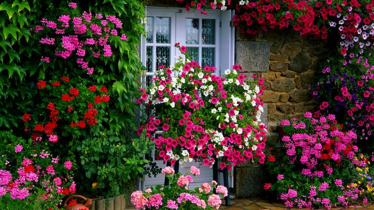 Farm House Garden wallpaper Flowers & Foliage