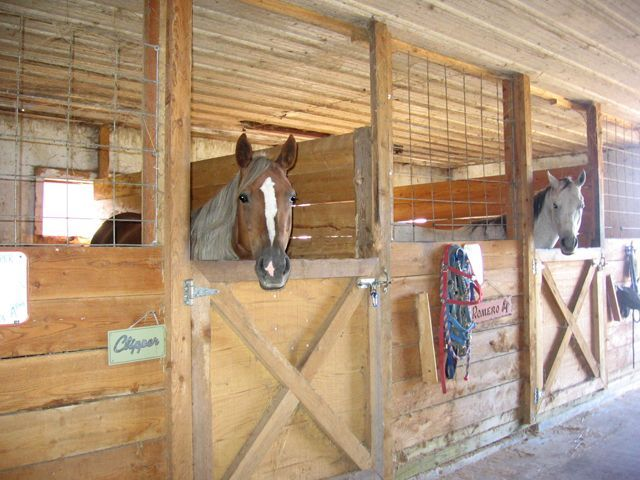 Best 25 Simple Horse Barns Ideas On Pinterest Horse Barns Small Horse Barns And Saddlery Barn