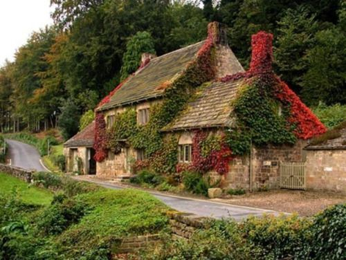 3304 Best Images About Cottage Life Cozy And Sweet On