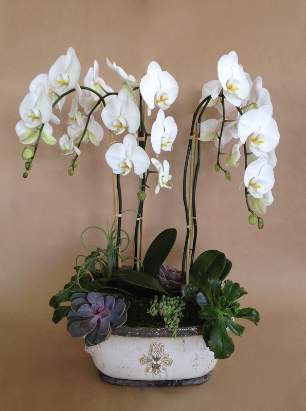 17 Best Ideas About Potted Orchid Centerpiece On Pinterest