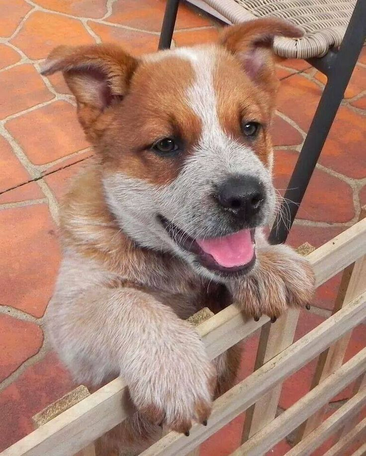 Pin by Rusti Lang on Goggy! Pinterest Plays, Puppys