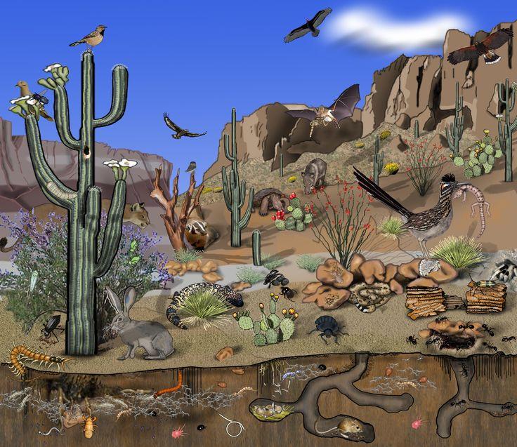 Arizona Food Web Ecoplexity Teaching Resources Life
