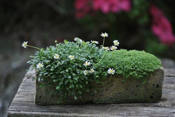 Best 25+ Brick Planter Ideas Only On Pinterest
