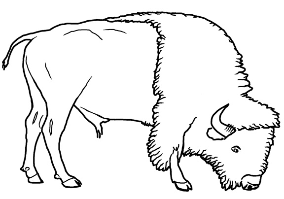 215 best images about white buffalo power animal on