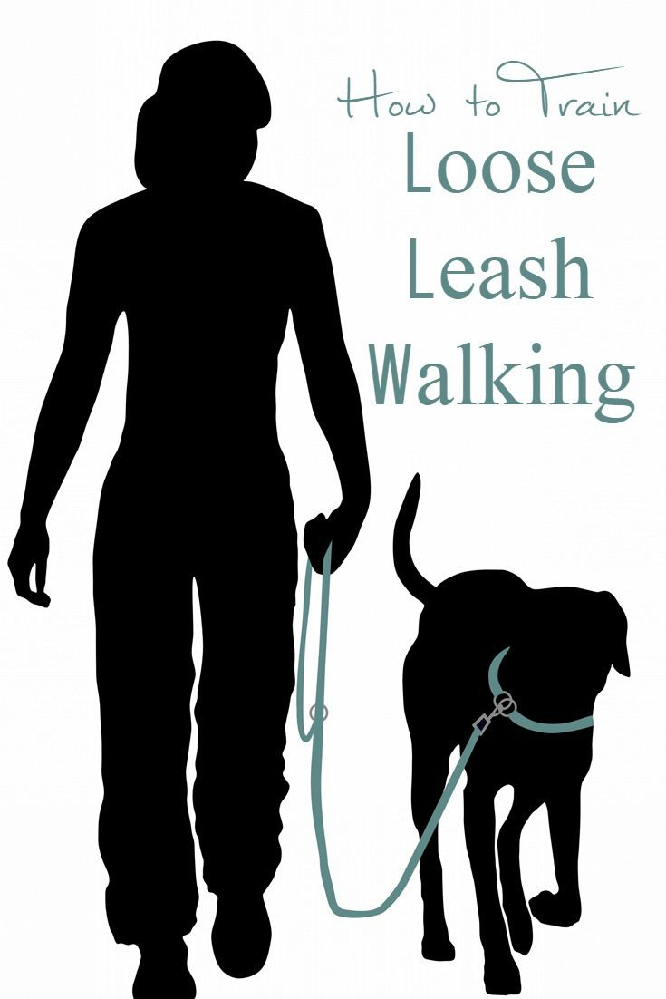 How to train loose leash walking dog walking tips and