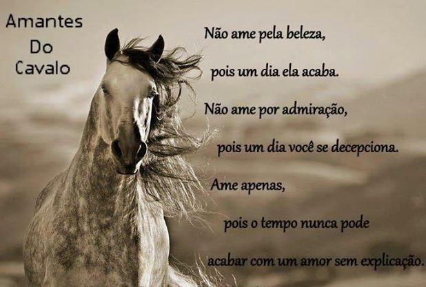 Pin Doa Thiago Horse Em IM HORSE Pinterest Imagens