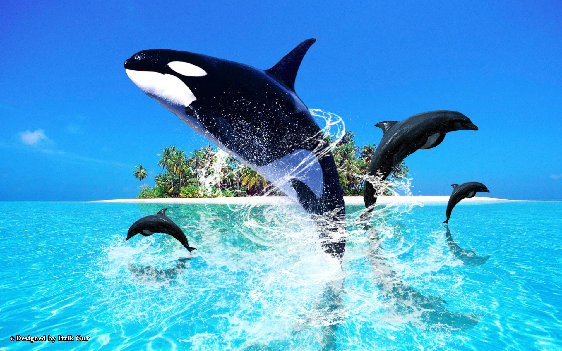 HD Dolphin Jumping Wallpaper Download Free 114967