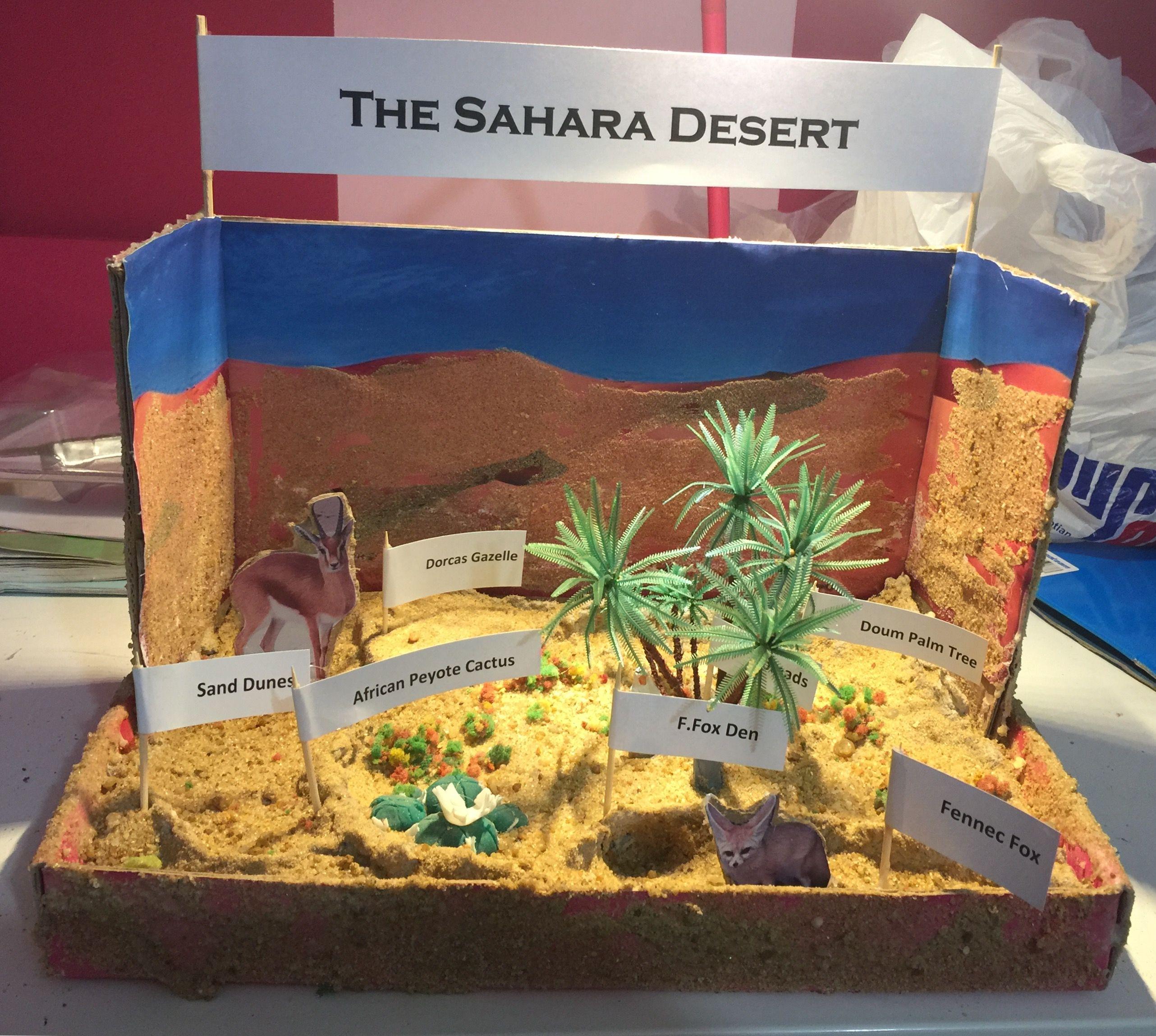 Sahara Desert Diorama Summer Activities Pinterest