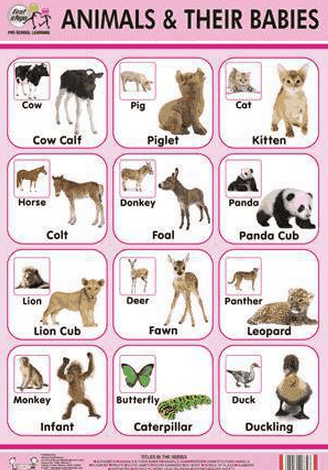 English vocabulary Animals and their babies Learn or