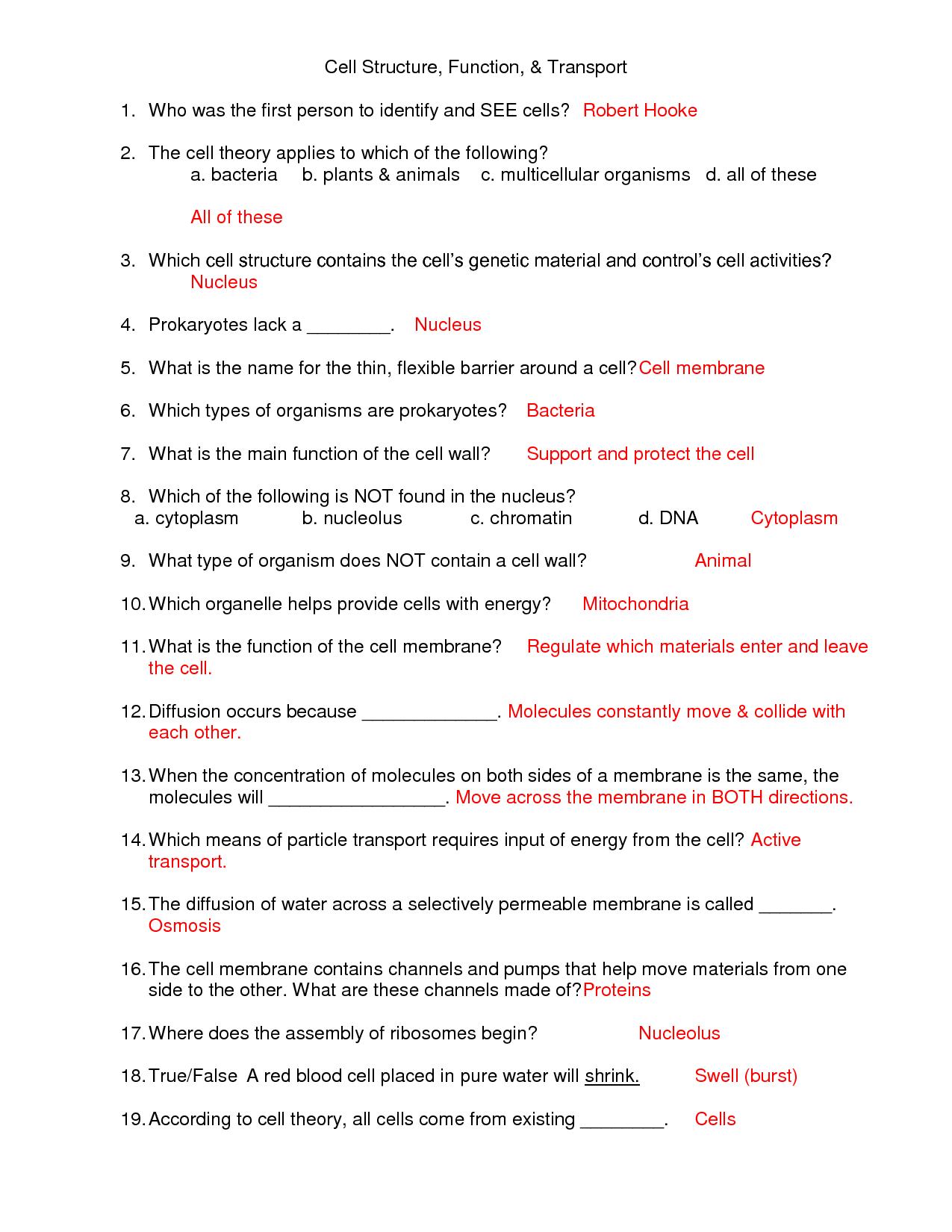 Worksheet On Plant Tissues
