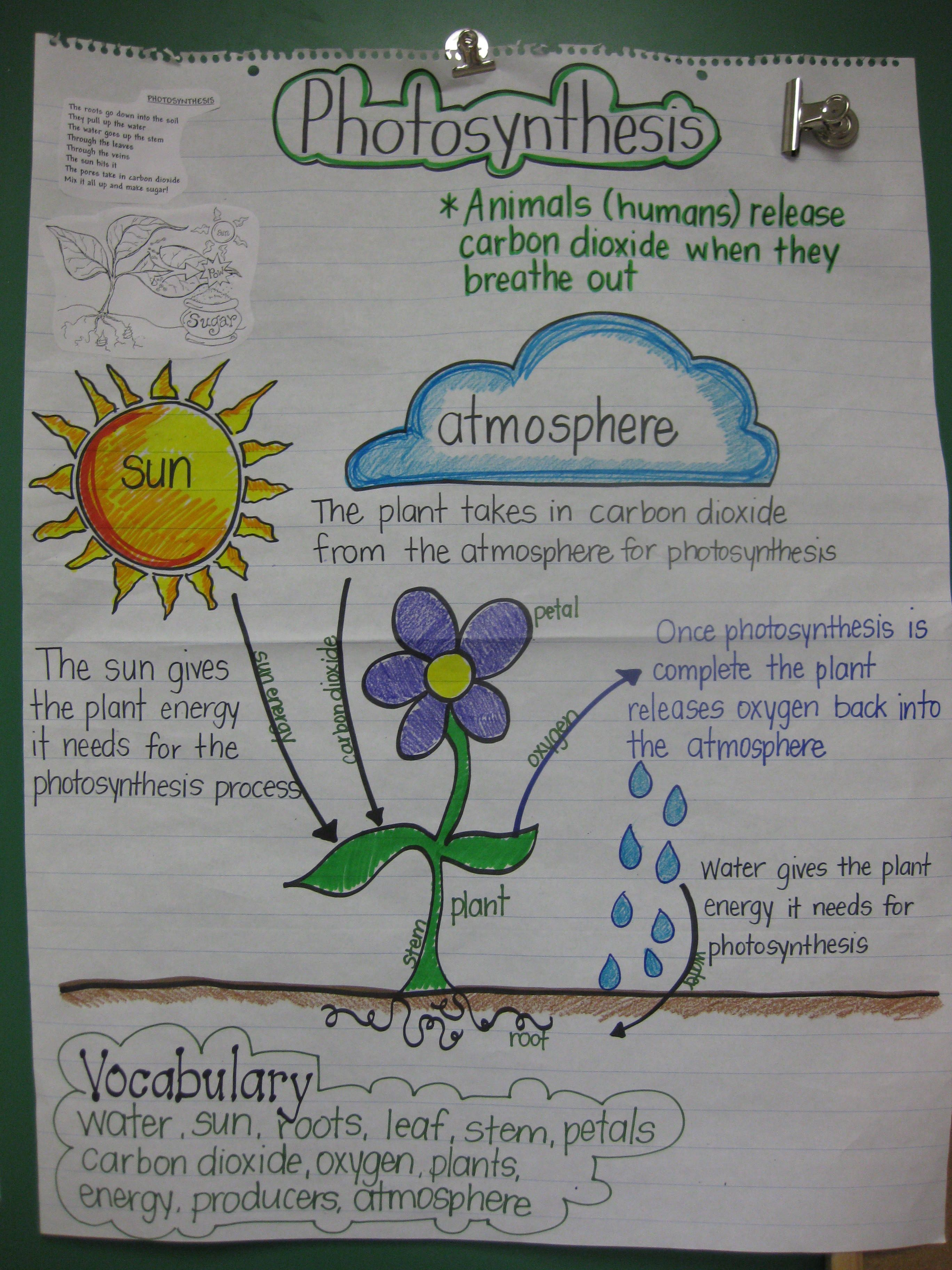 Staar Review Anchor Chart For 5th Grade Science