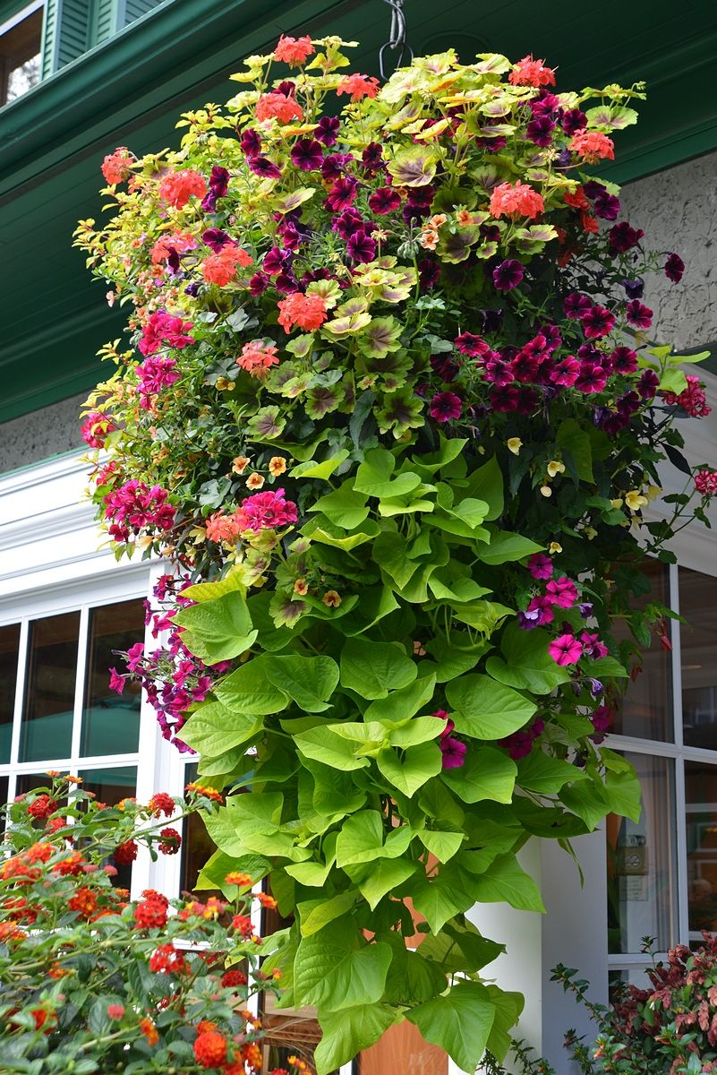 Hanging Baskets at The Butchart Gardens Container