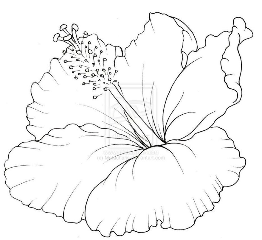 hawaii coloring pages to print  hibiscus coloring pages