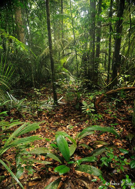 Rainforest Frogs, Leaves and South america