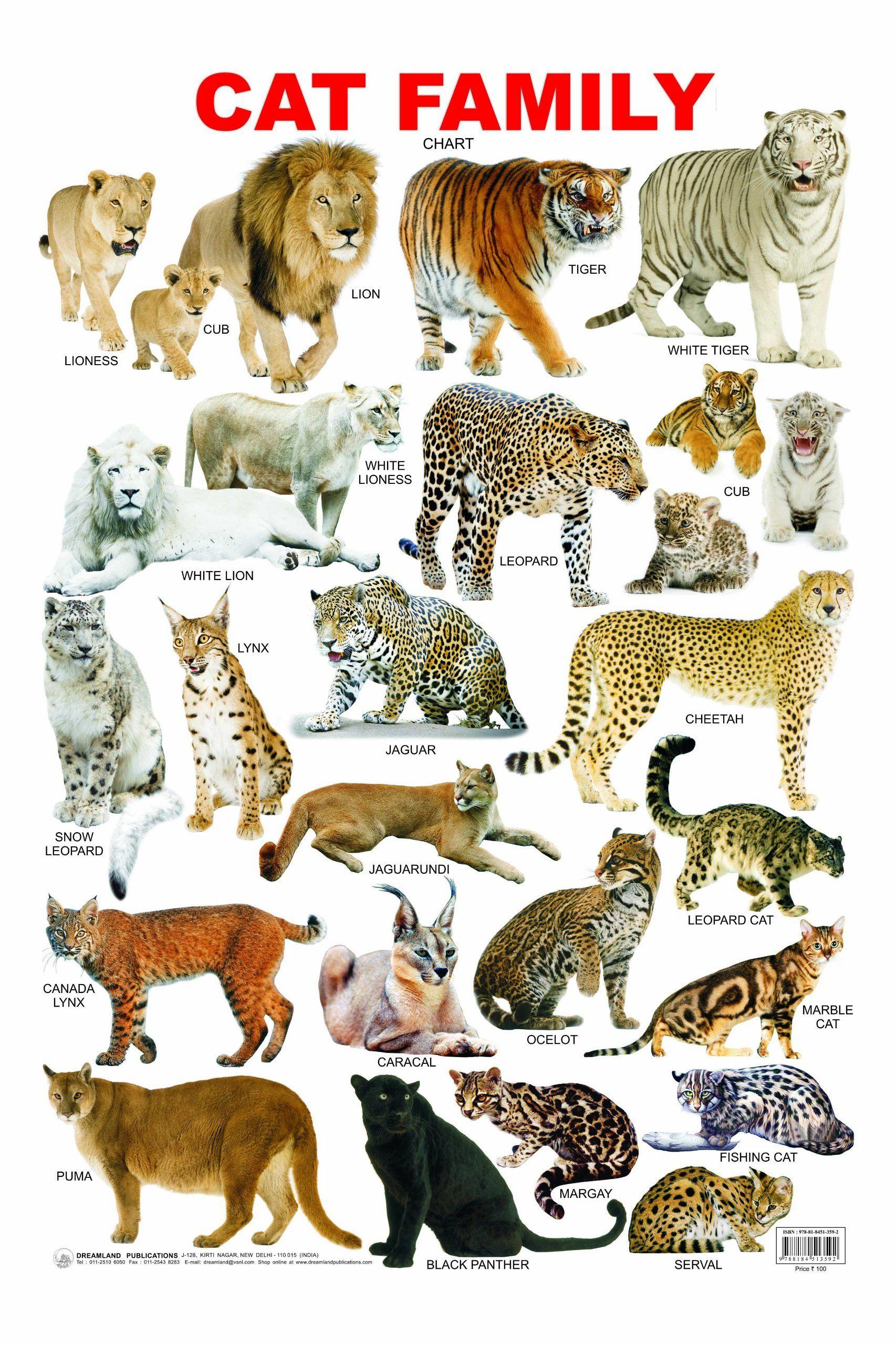 Bildergebnis für cat family chart Animals / Tiere