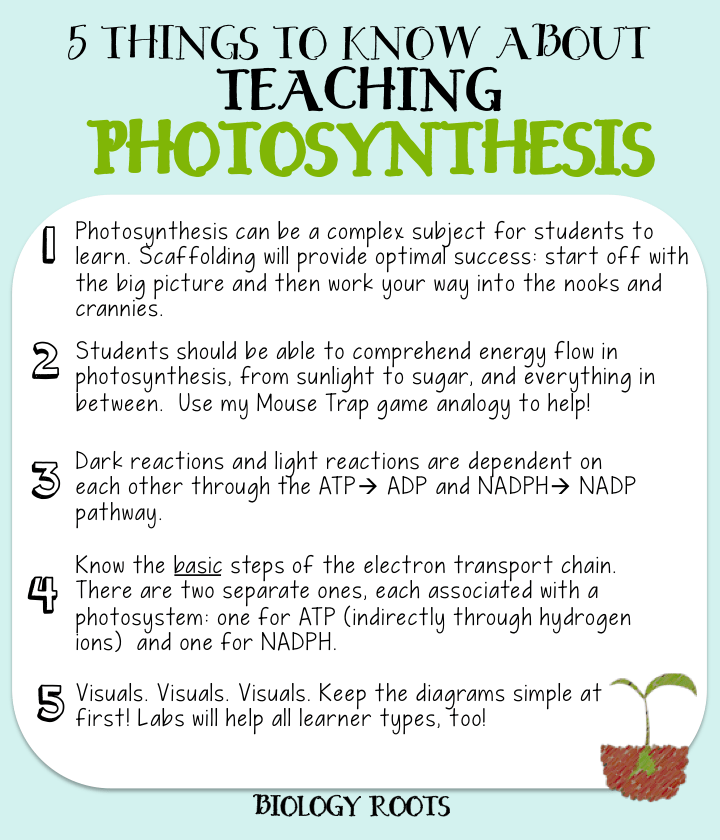 """5 Helpful Tips about Teaching Photosynthesis (formerly """"5"""
