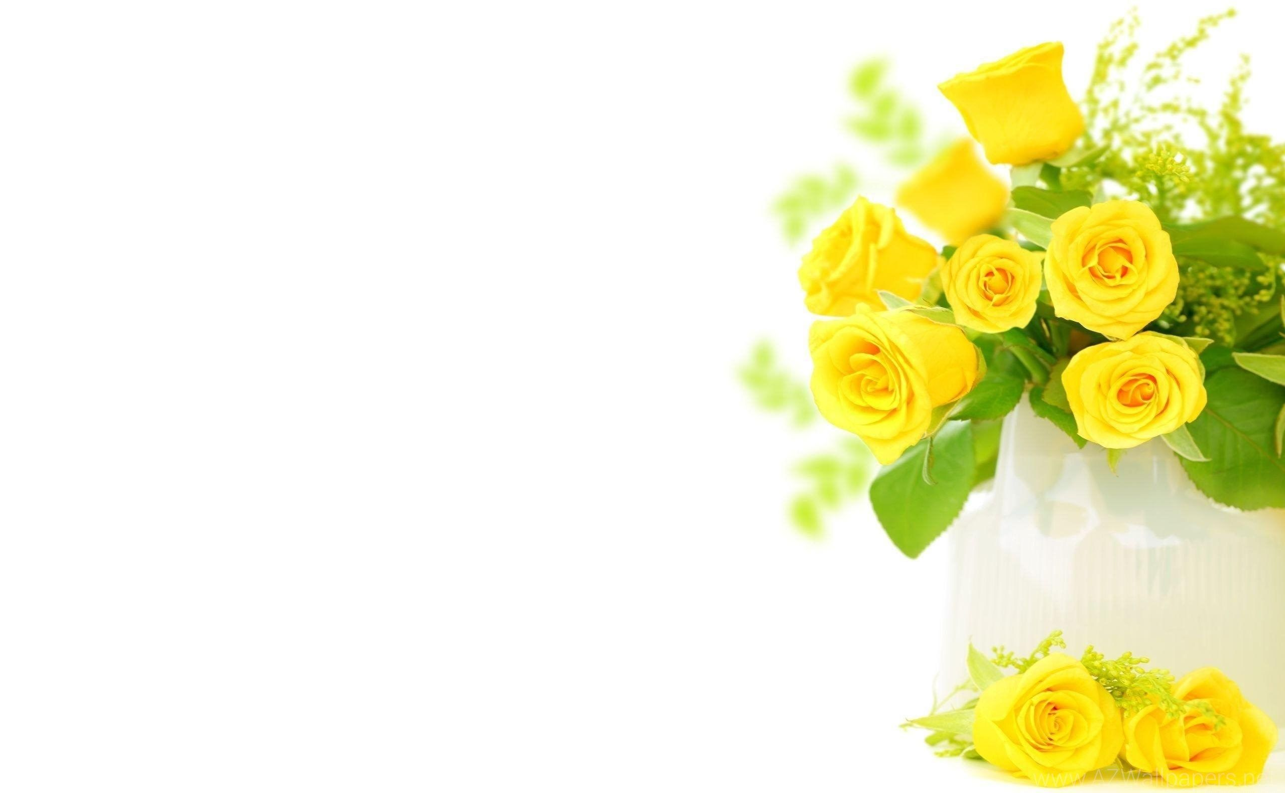 Yellow Roses Background Wallpaper HD Wallpapers