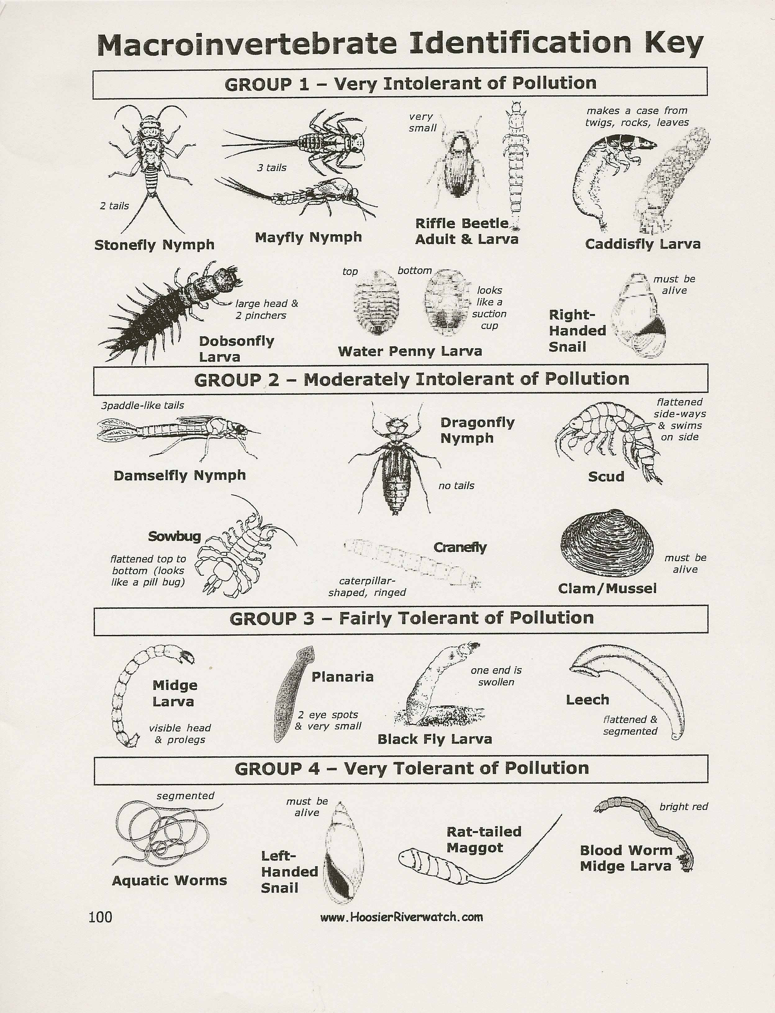 Animal Tracks Identification Chart Identification Key