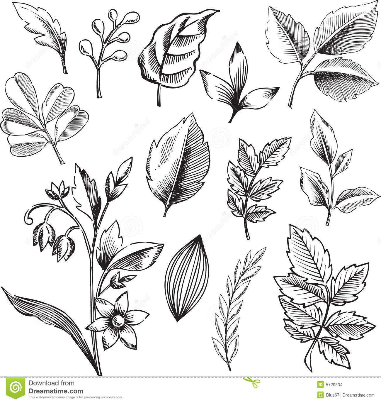 Leaf Illustrations Black And White