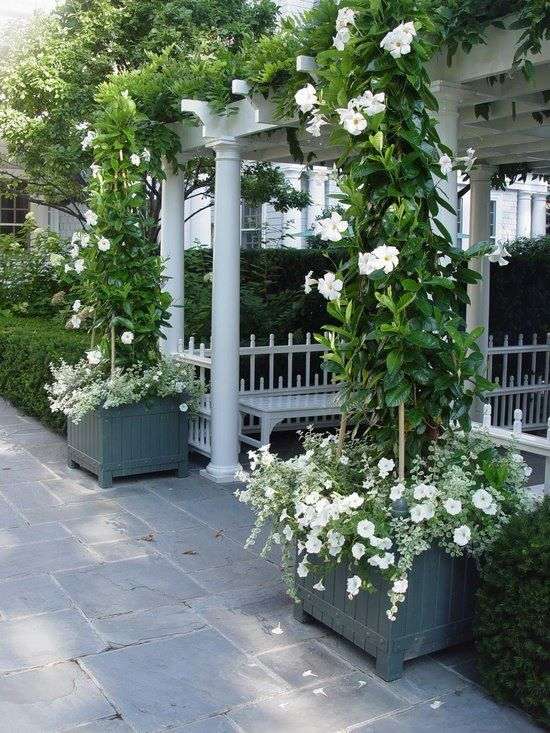 Pretty planters & climbing roses Flowers & Gardening
