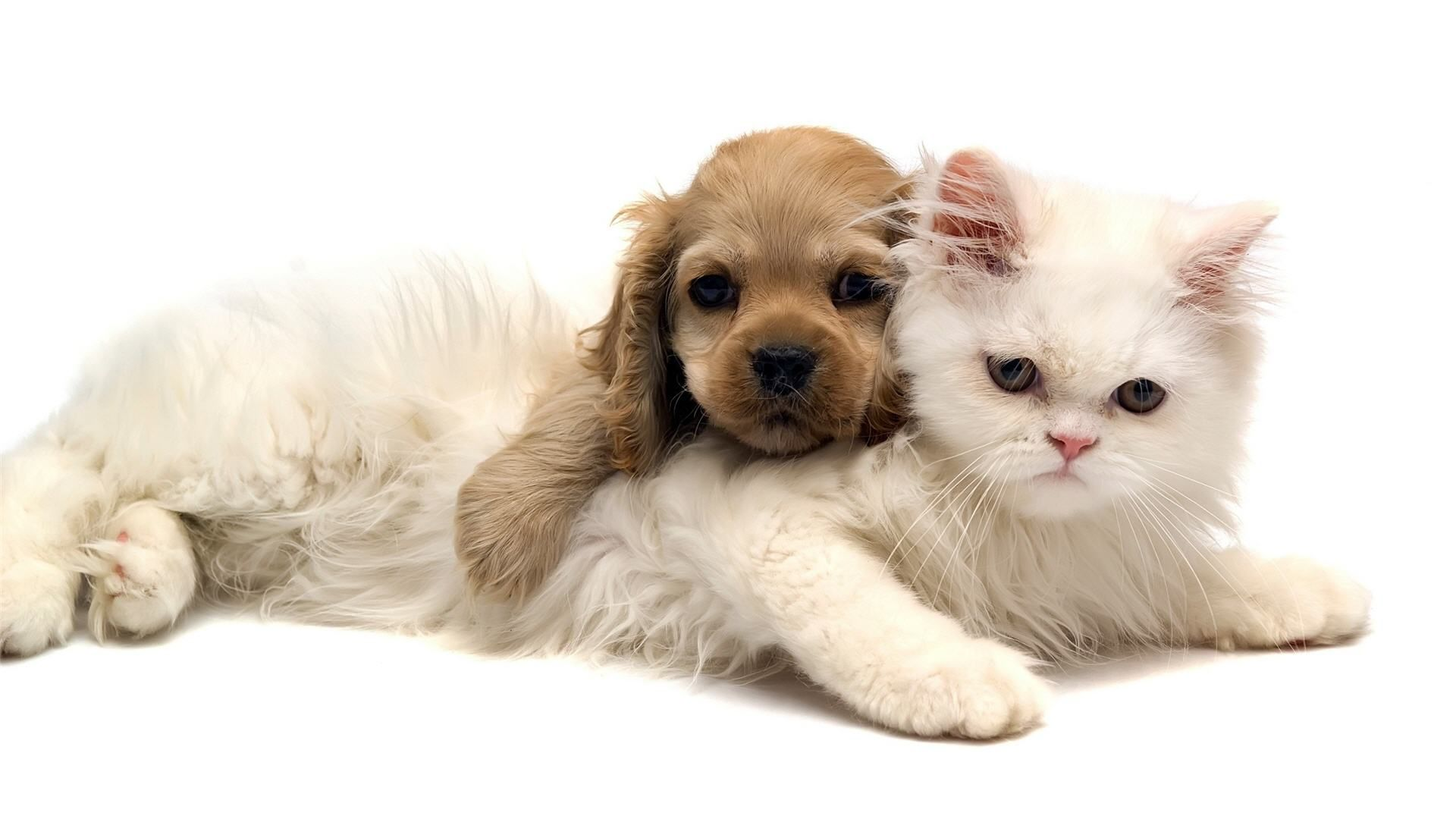 Adorable Cat and Dog Wallpaper Wallpapers Green Cat Cute