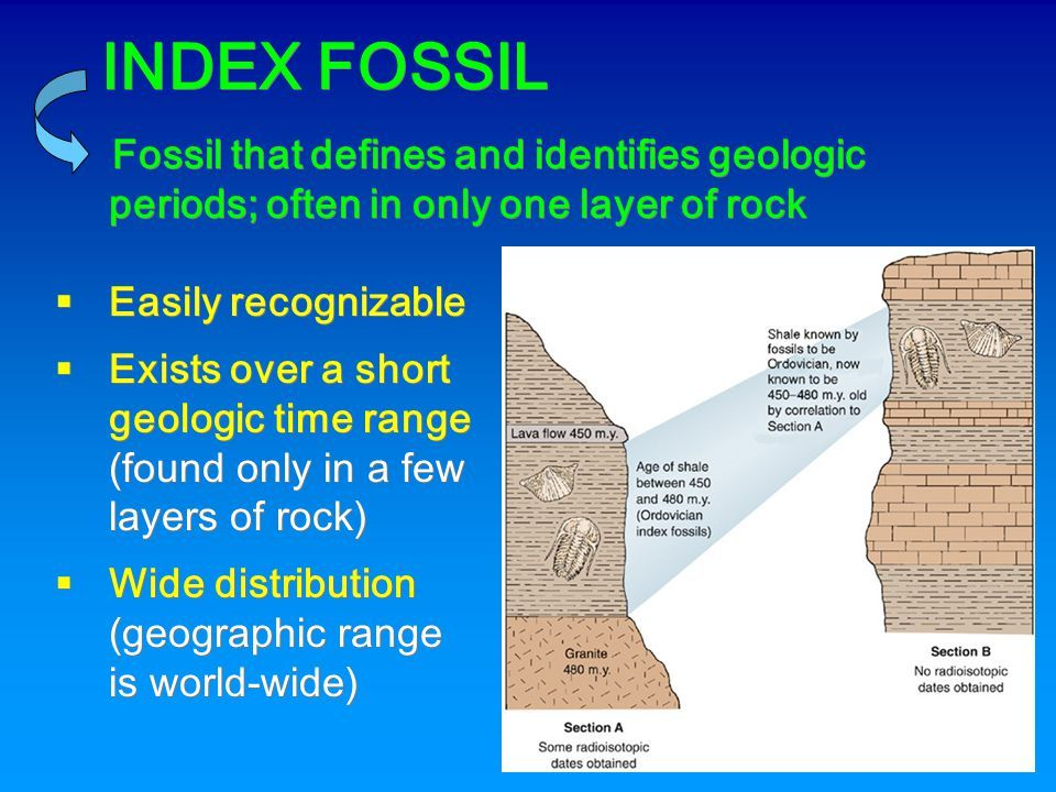 Index fossil Earth Science Pinterest Fossils and