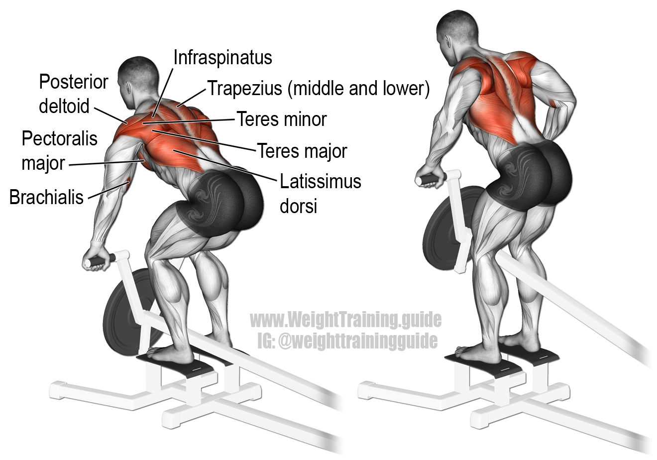 T Bar Row A Major Compound Exercise For Major Upper Body