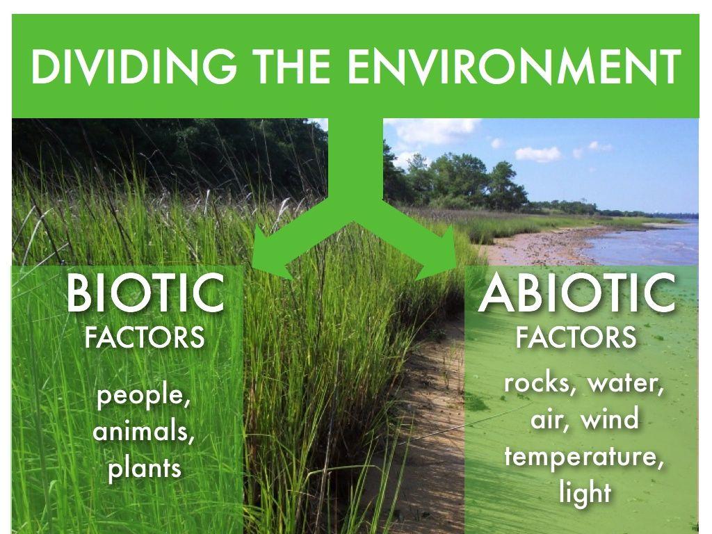 biotic factors Abiotic & Biotic Factors environmental