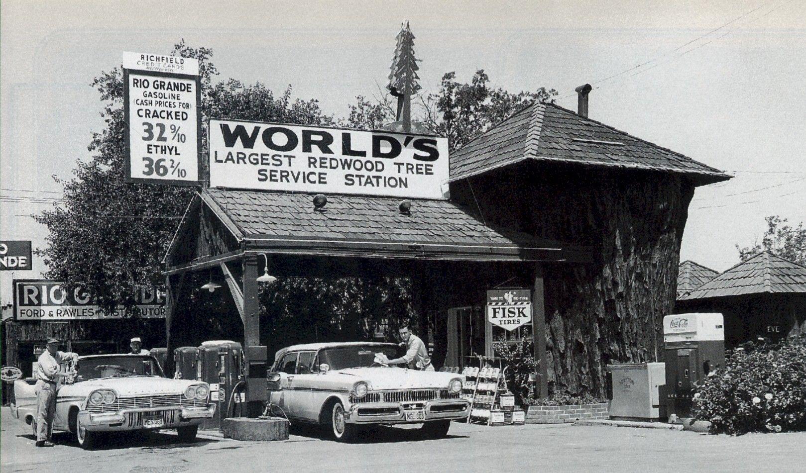 Redwood Tree Service Station Ukiah, Ca. 1950's Vintage