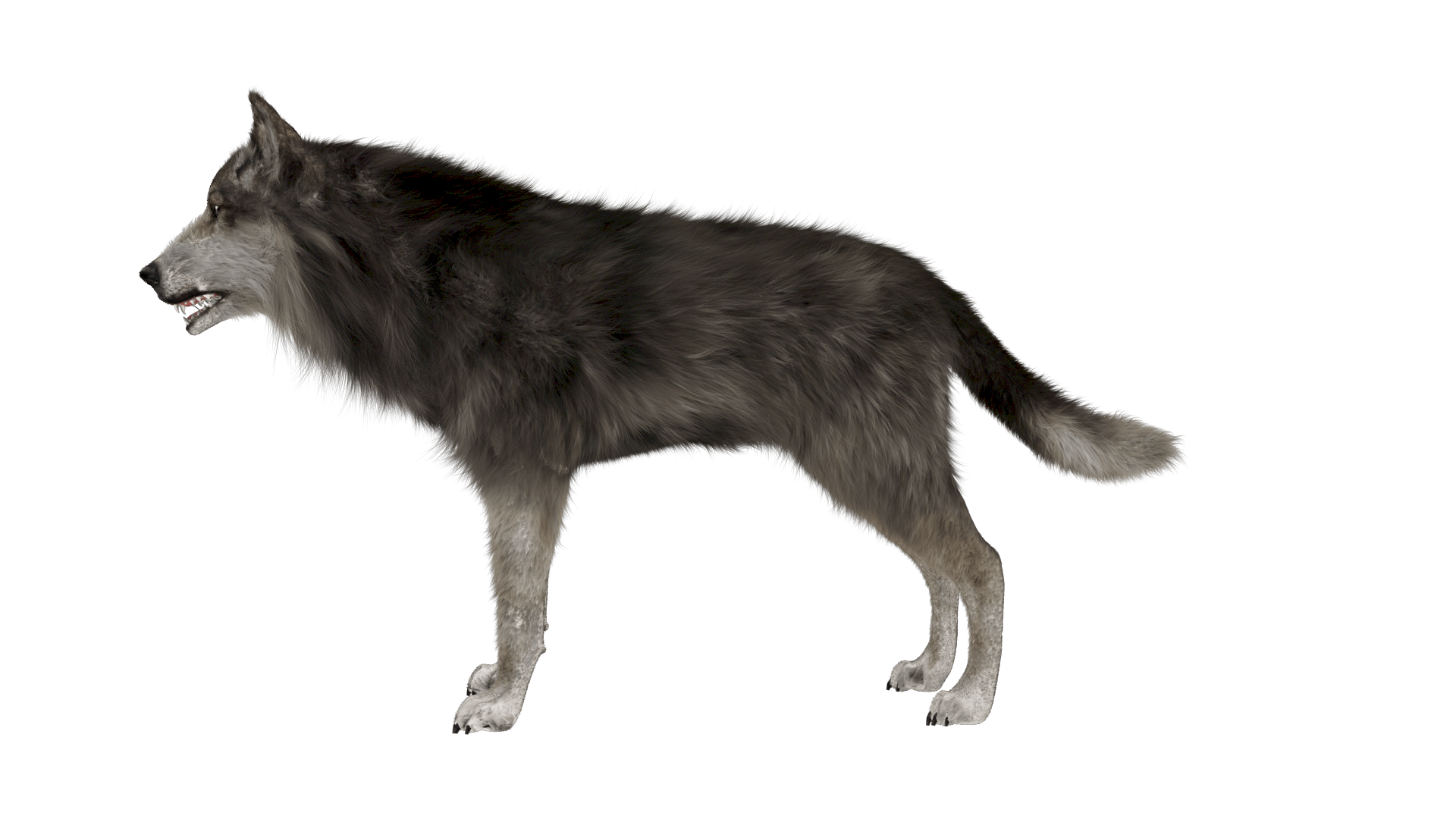wolf side image_main image PCC2_animal_bust02