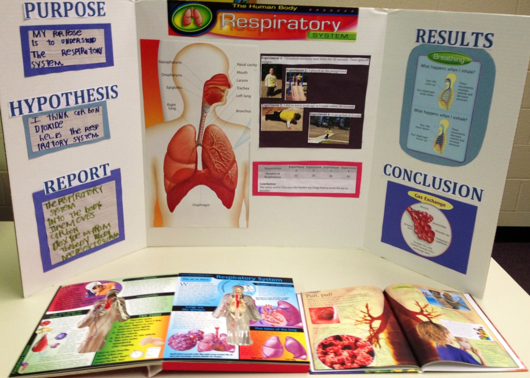 Zion's Respiratory System Project Science Projects