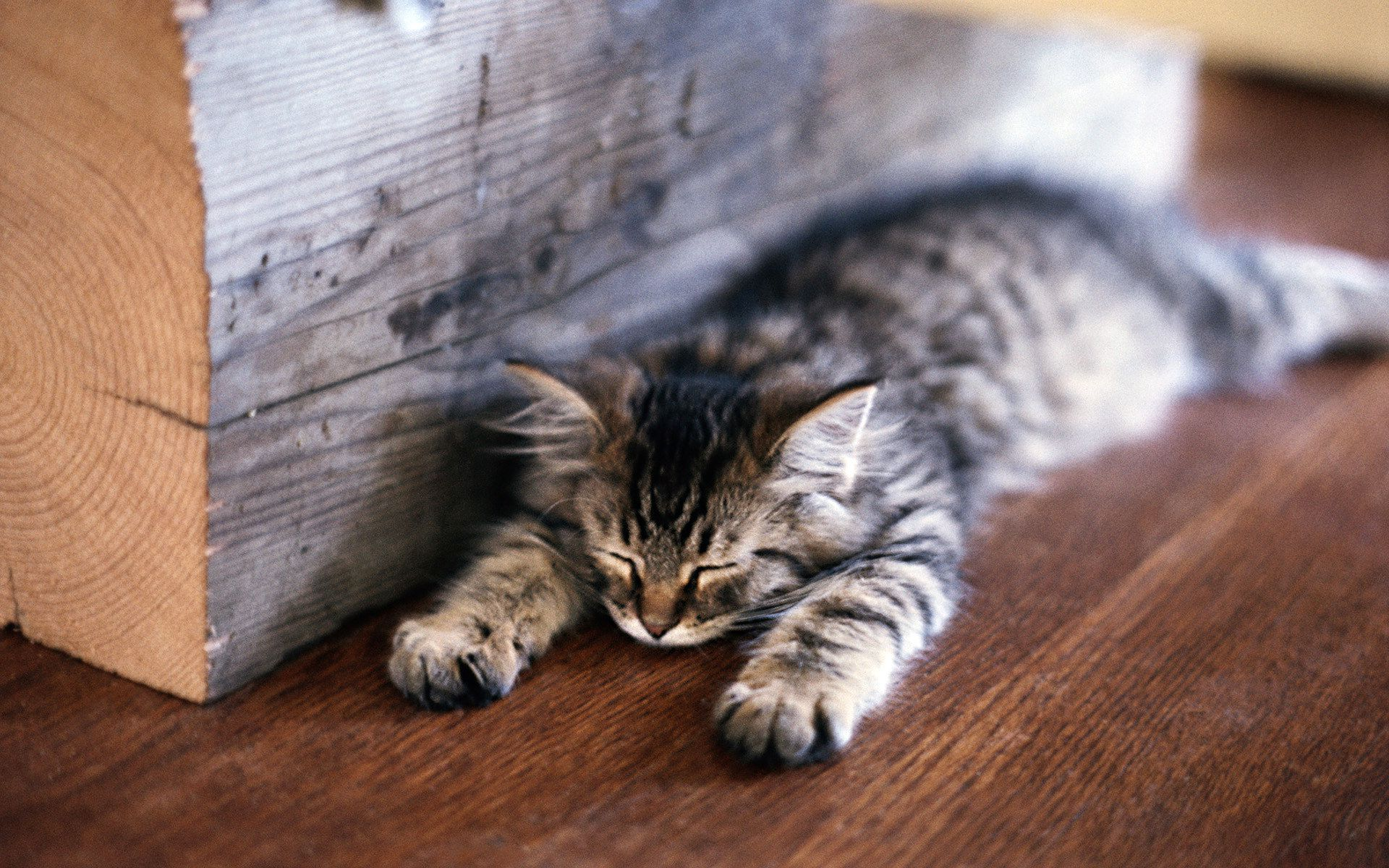 find out: lazy cat wallpaper on http://hdpicorner/lazy-cat