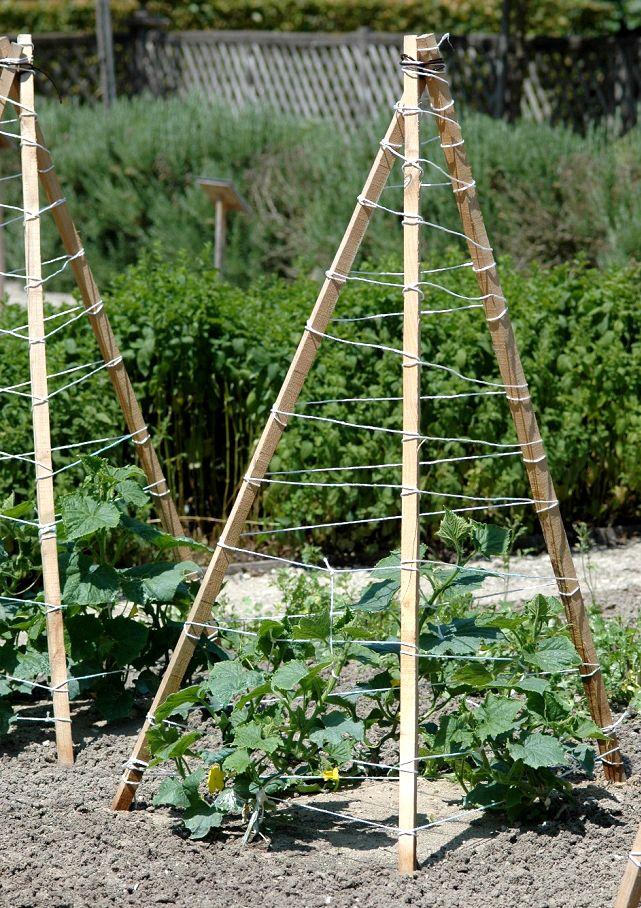 Tuteur à cornichon Jardin Pinterest Gardens