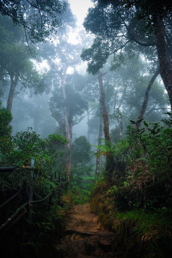 Rainforest Borneo, across from the island of Sulawesi