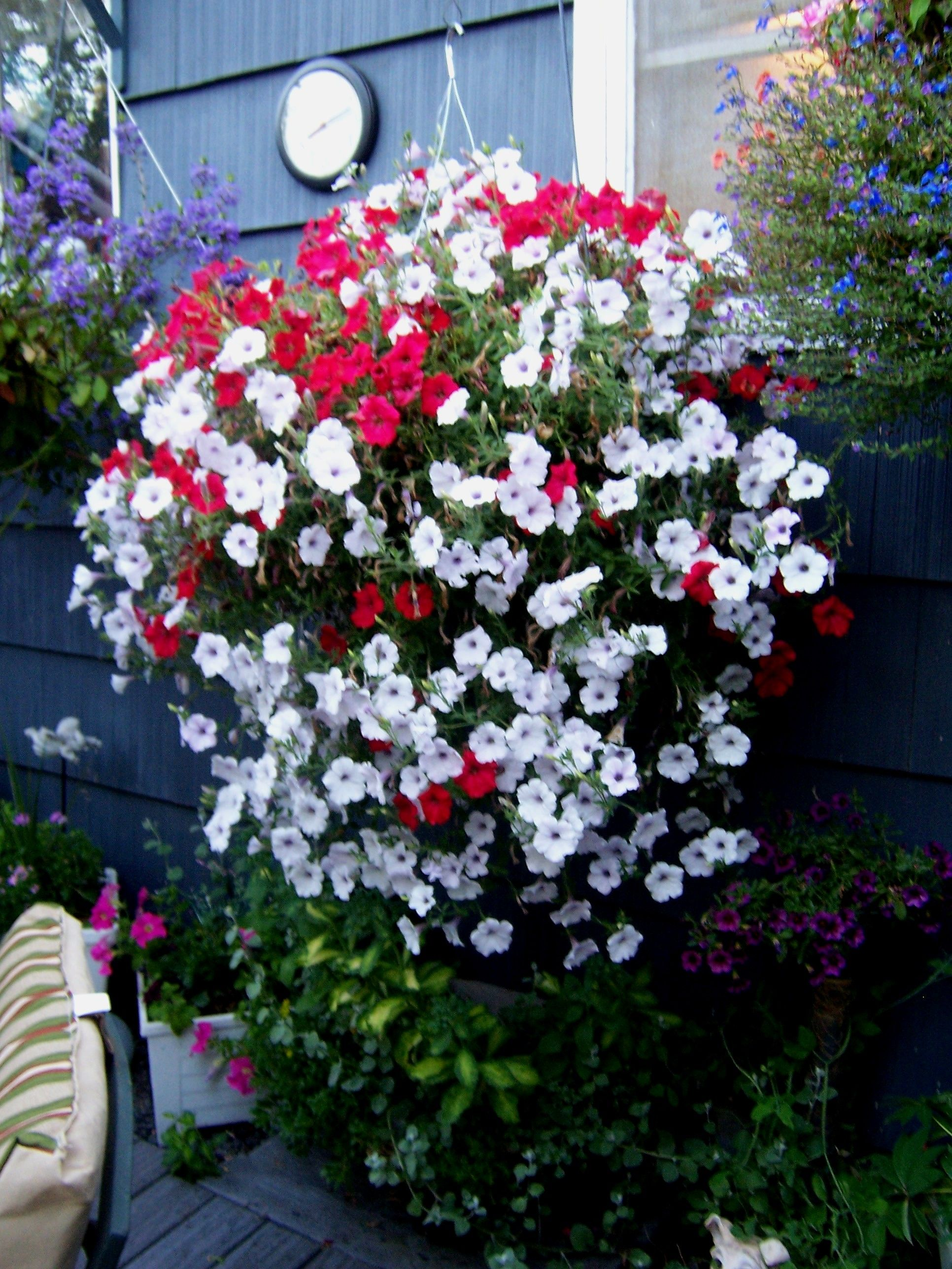 Red and White Petunia Basket For the Love of Flowers