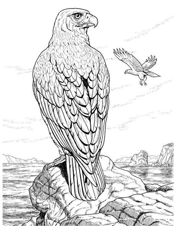 1000 images about eagles on pinterest eagle drawing bald eagle