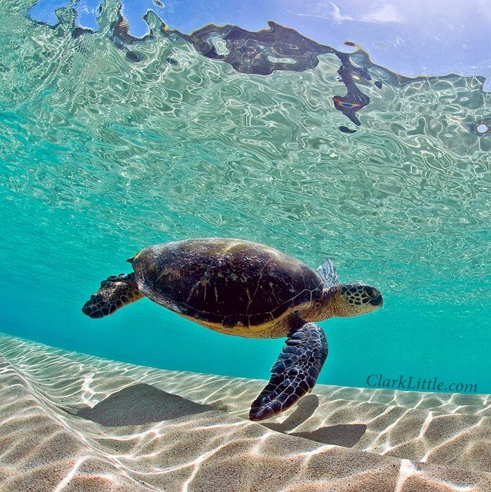 sand bar, sea turtle, & sunshine m a r Pinterest Sea