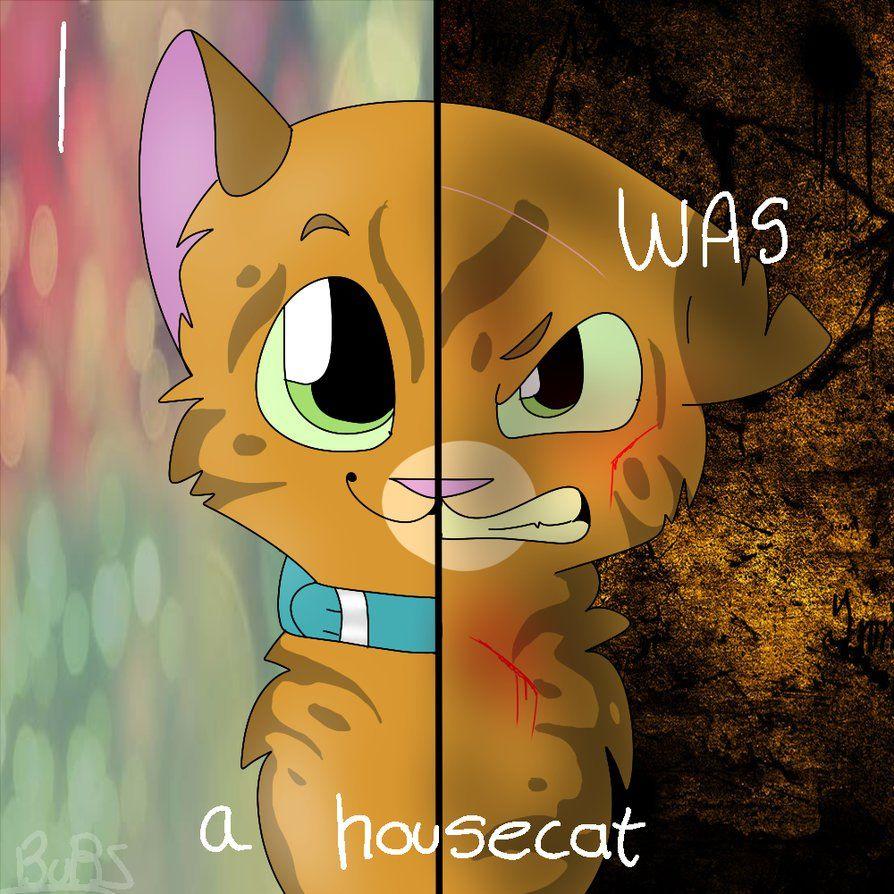 spottedleaf x firestar sad Google Search Warrior Cats