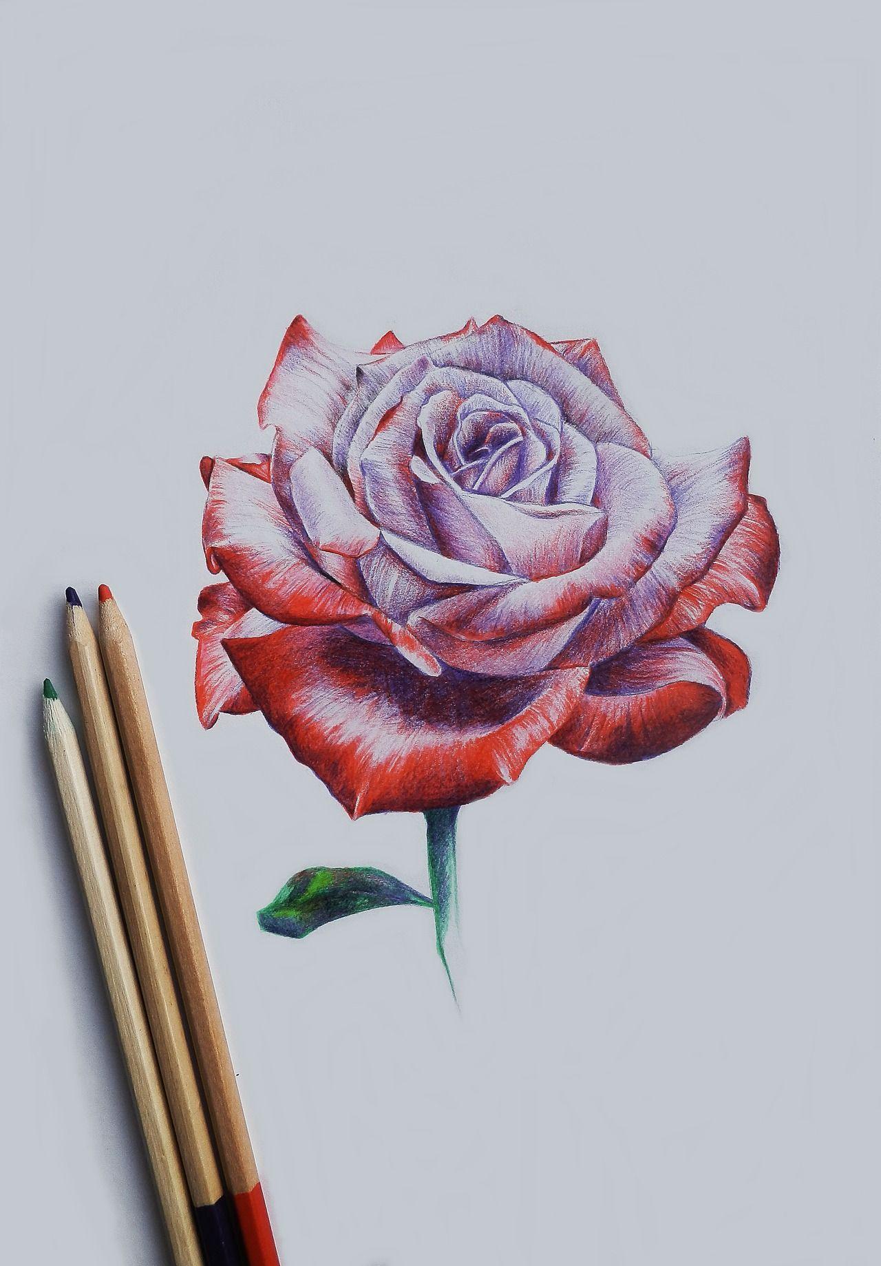 Drawing rose … Pinteres…