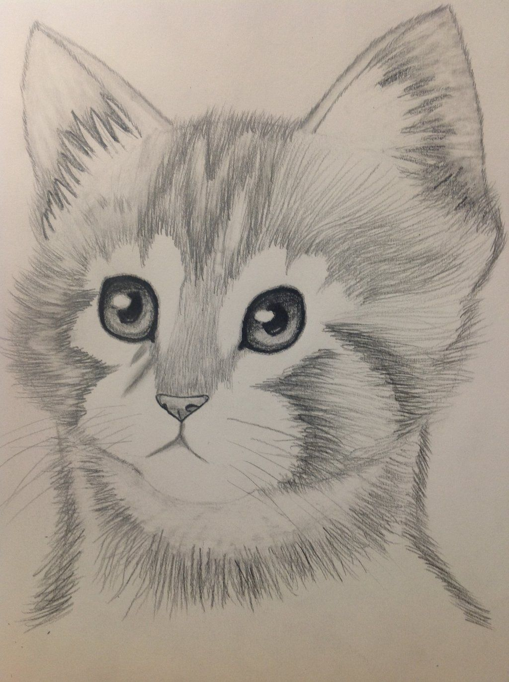 Cartoon Pencil Drawing Picture Animals Drawing and