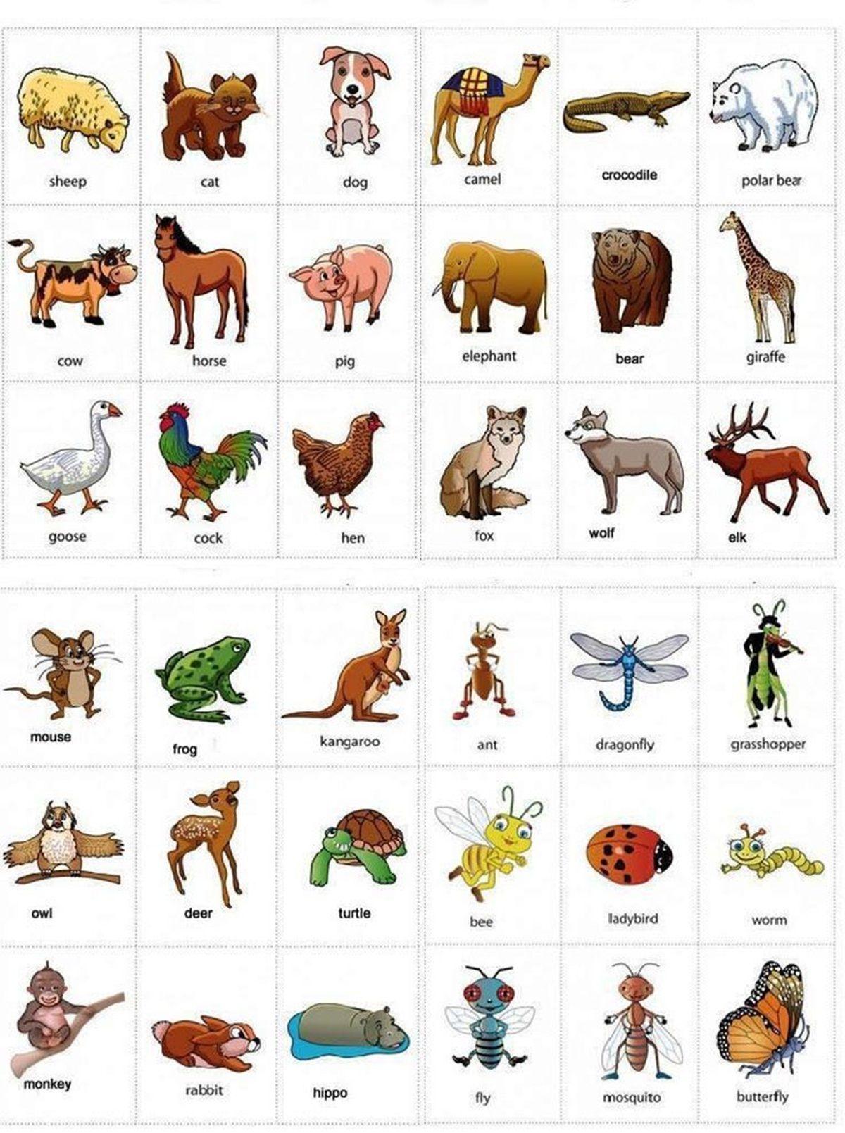 Animals in English IELTS Pinterest English, English