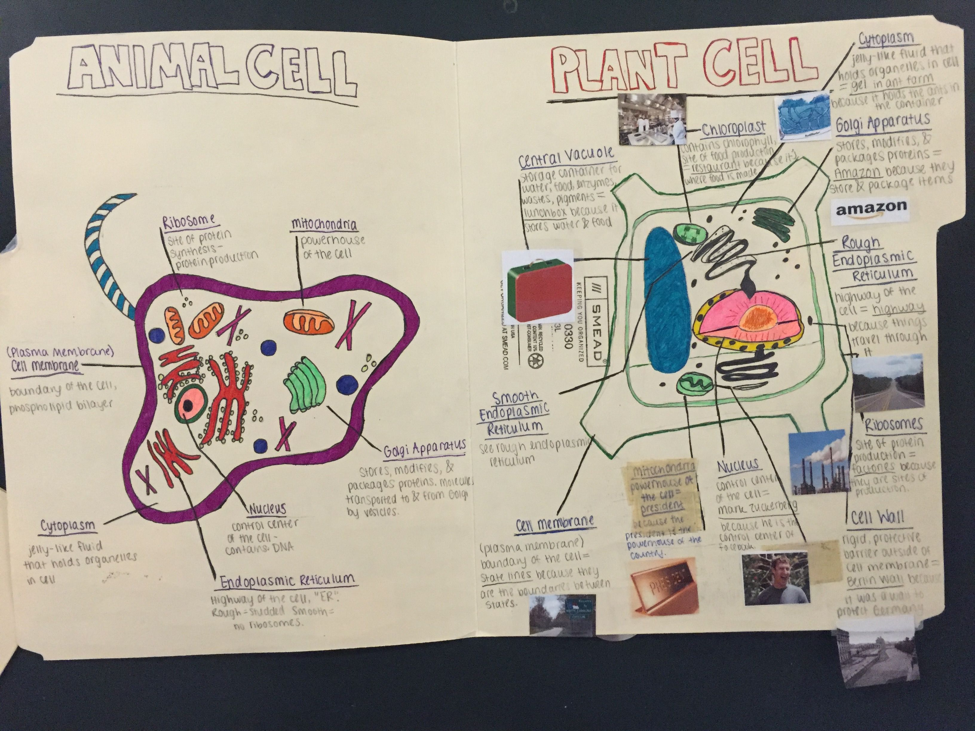 Cell Folder Project