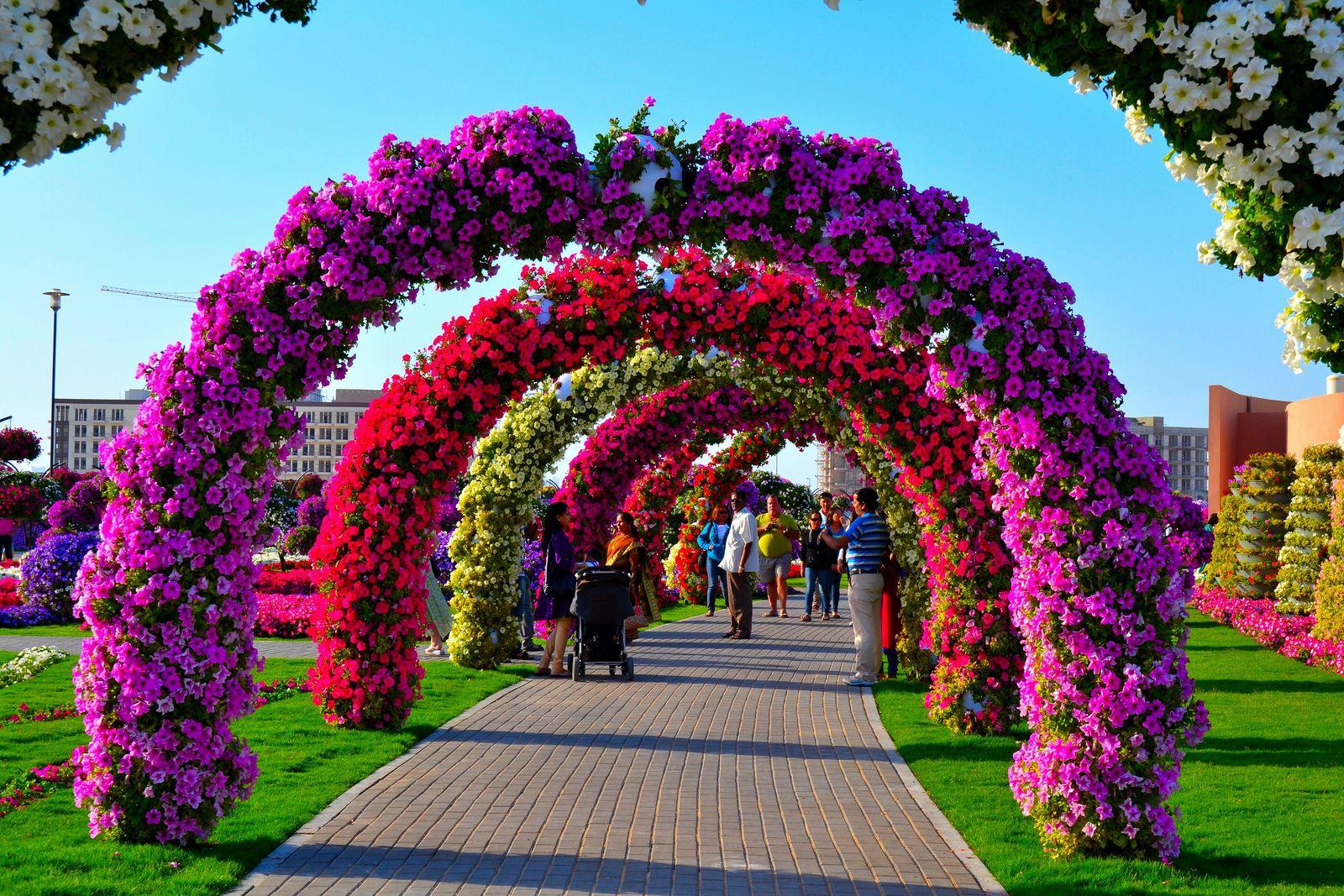 Garden in Dubai. Garden Pinterest Gardens