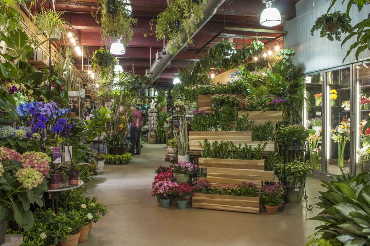 NYC Florist, Flower Shop, & Delivery Plant Shed New York