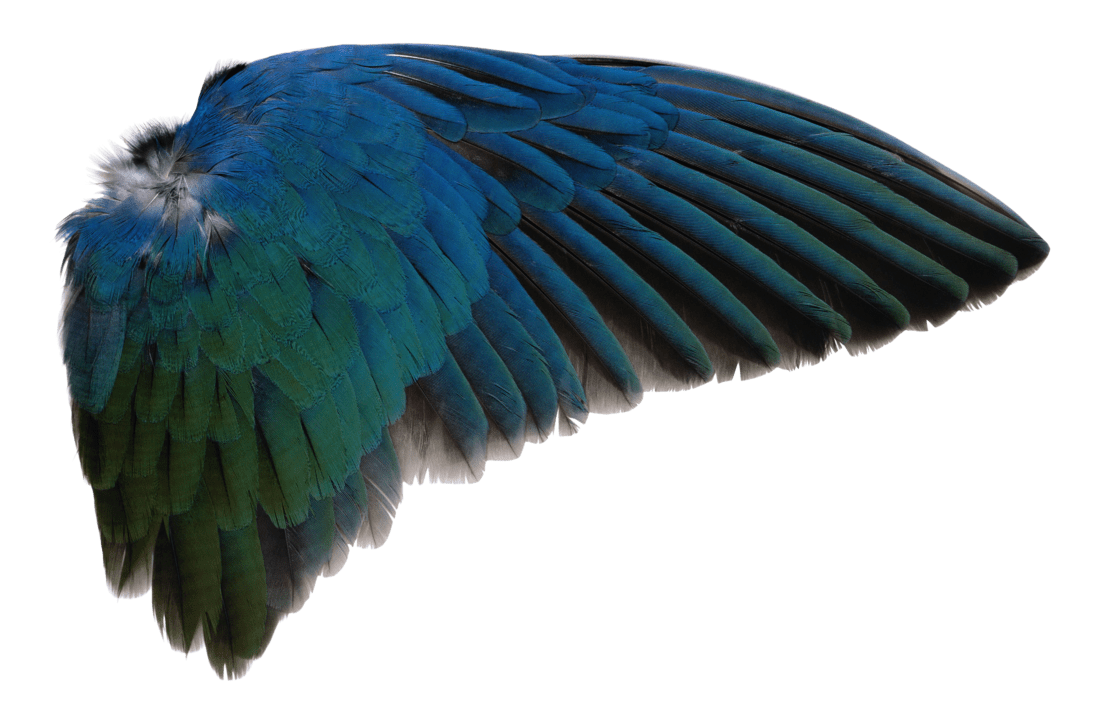 Wing PNG by *AbsurdWordPreferred on deviantART PNG files